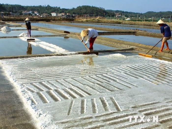 Hạt muối Quảng Bình - Thu hoạch muối