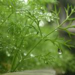 Bài thơ Cho tôi - Ảnh long lanh hoa cỏ mùa xuân